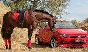 اسب بخار